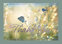 A Soft Touch Thank You Cards